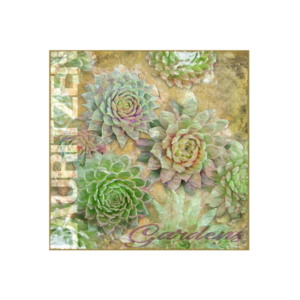 Lauritzen Gardens Omaha Succulents Canvas Art