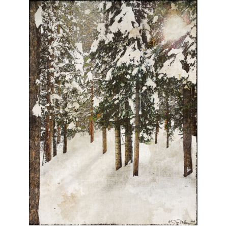 Snowy Pines 1 Canvas