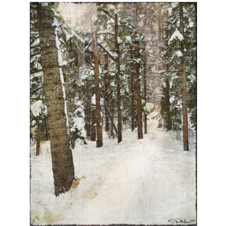 Snowy Pines 2 Canvas